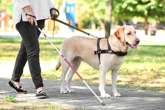Service Dog vs Emotional Support Dog