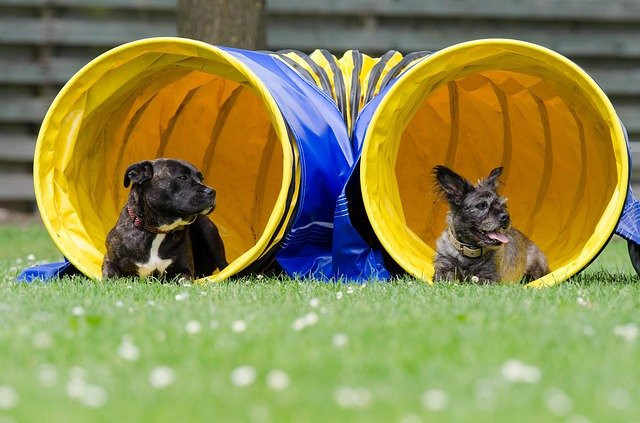 dog agility at home