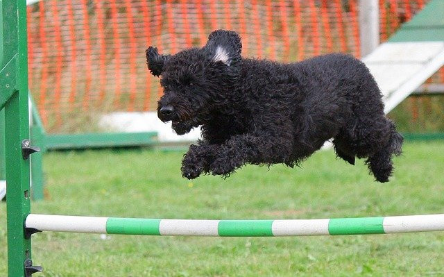 Dog Agility At Home, Top Tips for Fun Training