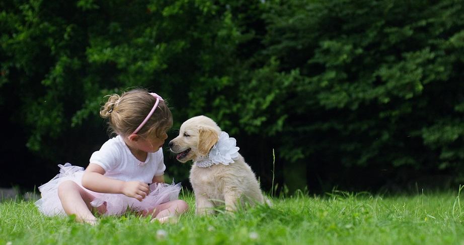 9 Best Puppy Training Tips: Raise a Good Pup!