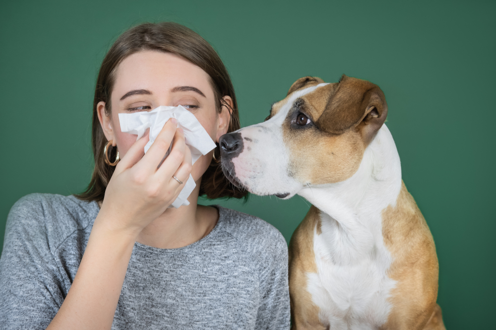 allergic to dogs symptoms