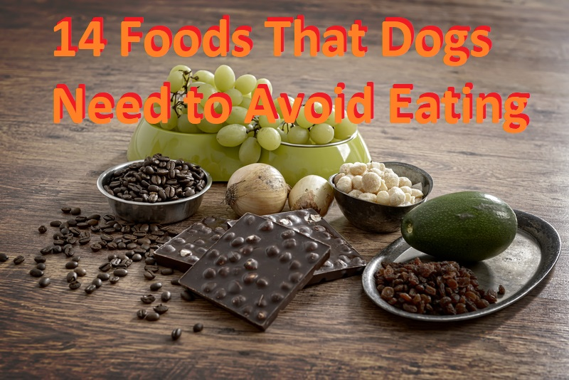 Foods That Dogs Need to Avoid Eating