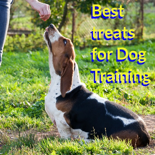 Best Treats For Dog Training with Recipe