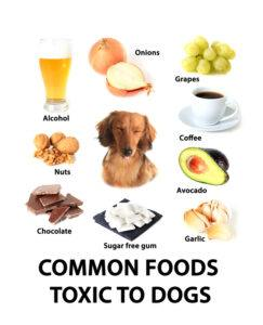 14 Foods That Dogs Need to Avoid Eating